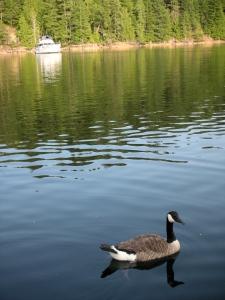 24 viner sound goose 3